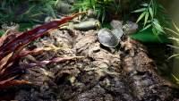 Korkrinde als Sonnenplatz für Schildkröten