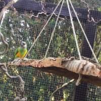 Eine Freude für alle Vögel