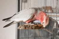 Sitzbrett aus Kork für Vögel kaufen