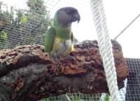 XXL Korkrinde für Vögel zum Anknabbern
