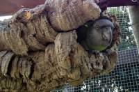 Korkröhre für Vögel kaufen