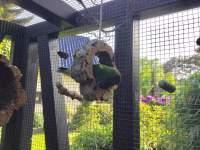 Schaukel-Ring aus Korkrinde für Vögel
