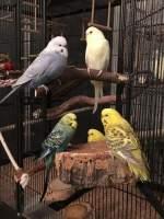 Naturkork für Vögel