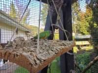 Flache Rinde aus Kork als Schaukel für Vögel