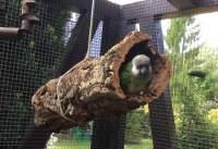 Röhre aus Korkrinde als Versteck für Haustiere